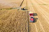 Corn harvest, aerial photograph