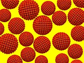 Herpes virus particles, illustration