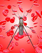 Mosquito and red blood cells, illustration