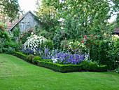 Rosengarten mit Glockenblumen und Hecke aus Buchs als Einfassung