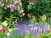 Rosen ('Super Fairy') und Steppensalbei ('Blauhügel', 'Caradonna', 'Light Pink') im Garten