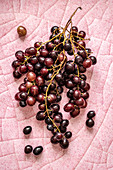 Bunch of dark grapes over pink background
