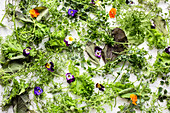 Herbs, lettuce and flowers on a white background