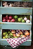 Ernte in Schubladen: Knoblauch, Zwiebeln, Rosenkohl und grüne Äpfelchen