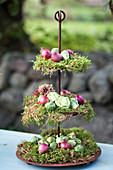 A stand with moss, Brussels sprouts and red onions