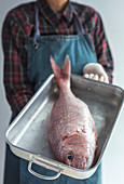 Person holds raw bream fish in metal baking dish