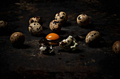 Quail eggs on dark background