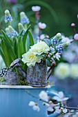 Traubenhyazinthe im blauen Emaillebecher, Blüten von gefüllter Primel in Minigießkännchen