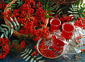 Preserving jars with homemade rowanberry jelly, a basket with rowanberries