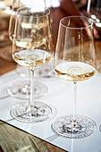 White wine glasses, lined up for wine tasting
