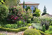 Mediterraner Garten mit blühenden Rosen und Buchshecken, Weg mit Holzhäcksel gemulcht