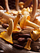 Chanterelles and cocoa beans