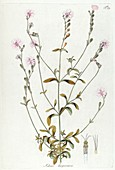 Flower anatomy, illustration