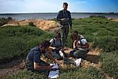Scientists examining yellow-legged gulls