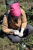 Researcher marking a gull's egg