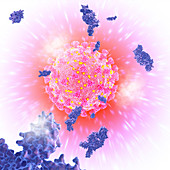 Antibodies and covid-19 coronavirus, illustration