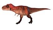 Artwork of a tyrannosaurus
