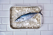 Whole bonito on crushed ice in an aluminum sheet