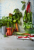 Fresh leafy vegetables and herbs from a garden