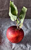 Ein Apfel der Sorte 'Arkansas Black' mit Blättern