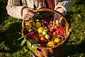 Frau hält Korb mit frisch geernteten Wildfrüchten