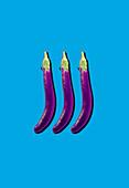 Snake eggplants