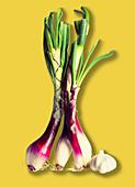 Organic Purple Scallions