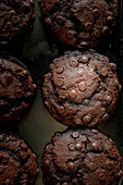 Chocolate muffins with chocolate drops