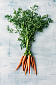 A bundle of fresh carrots with leaves