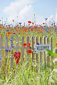 Kleiner Zaun mit Schild Willkommen und rotem Herz in Blumenwiese mit Klatschmohn, Kornblumen und Kamille