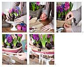 Anleitung für Blumentorte aus Hyazinthen
