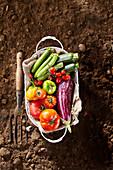 Frisch geerntetes Gemüse