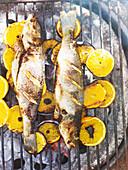 Gegrillte ganze Fisch mit Orangenscheiben auf Grillrost
