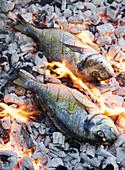 Sea bream on charcoal BBQ