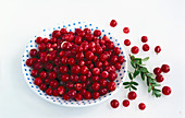 Cranberries on a blue dotted plate