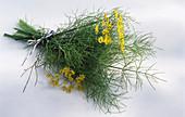 Ein Bündel Fenchel mit Blüte