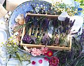 Duftkräuter und Rosen - für Aromatherapie