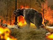 Giant wombat escaping fire, illustration