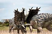 Titanoceratops, illustration