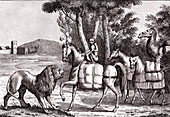 Animals Sending Tribute to Alexander, illustration