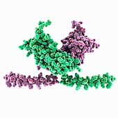 Hepatitis C virus NS5A domain, molecular model