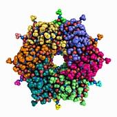 Wild-type CI2 inhibitor, molecular model