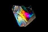 Grains of sand, light micrograph