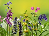 Spring flowers in species-rich woodland clearing