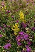 Hay meadow grassland