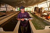 Fish farming, Israel