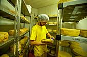 Cheese making, Israel
