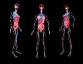 Human anatomy, 3D illustration