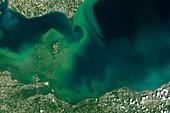 Algae bloom, Lake Erie, USA, satellite image