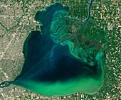 Algae bloom in Lake St Clair, USA, satellite image